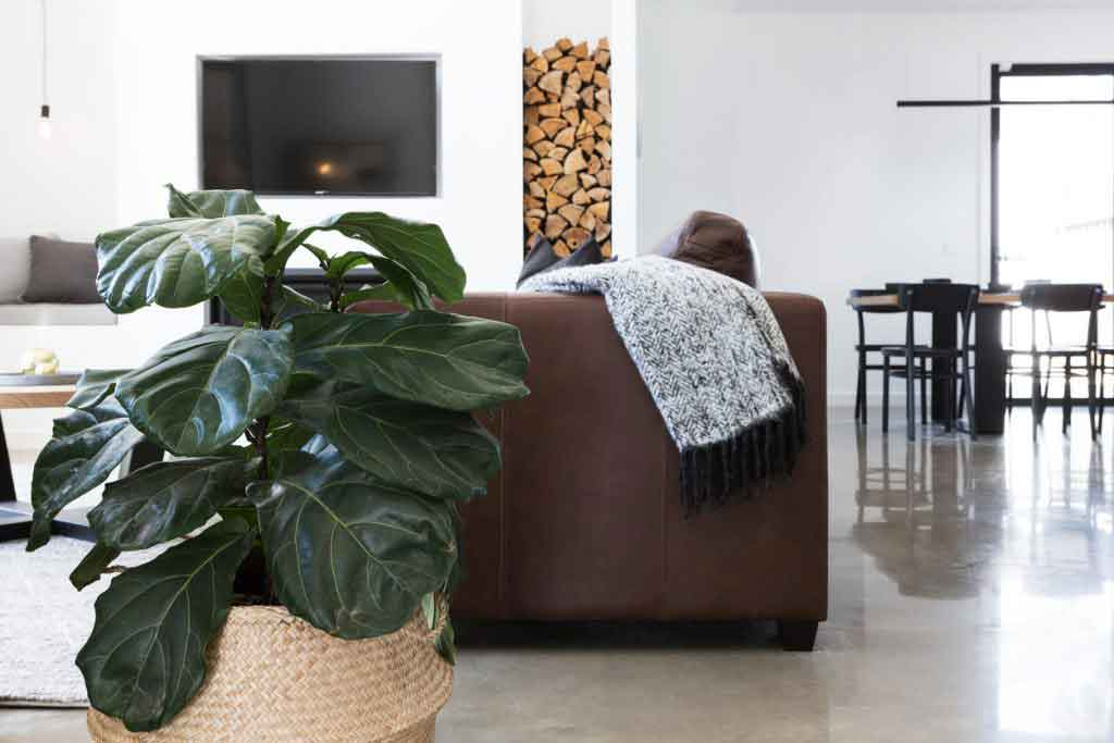 indoor plant concrete floors